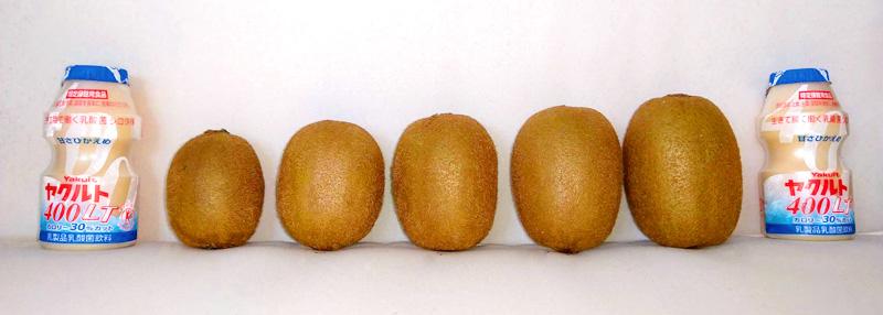 キウイのサイズの比較