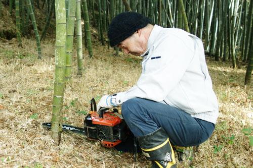 竹の間引き作業