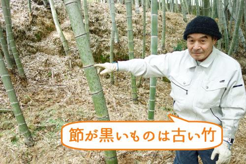 竹の節が黒いものは古い竹