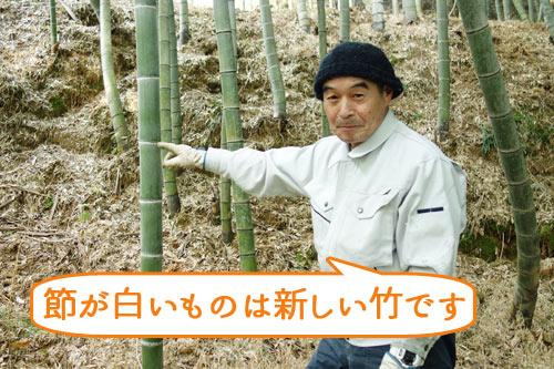 竹の節が白いものは新しい竹です